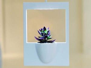 modern-polaroid-flower-vase